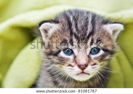 small kitten face close up
