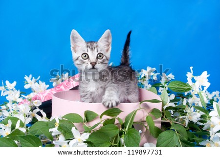 small kitten in a box in flowers