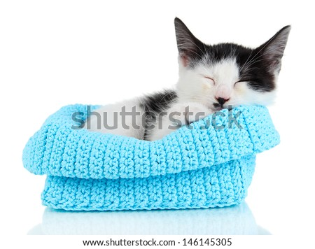Small kitten in blue knitting basket isolated on white - stock photo