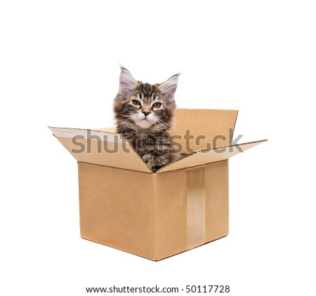 small kitten in box against white background - stock photo