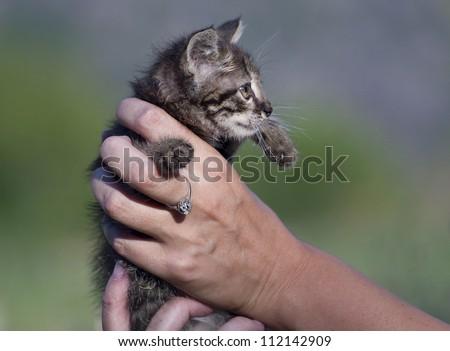 small kitten in female hands - stock photo