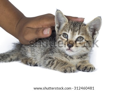 Small kitten in human hands. little kitten asleep on the human's hands over white background