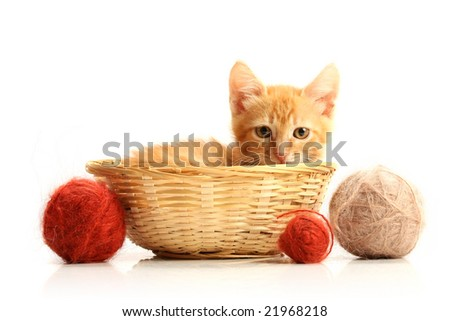 Small kitten in straw basket, isolated on white - stock photo