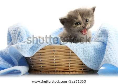 Small kitten in straw basket, isolated on white