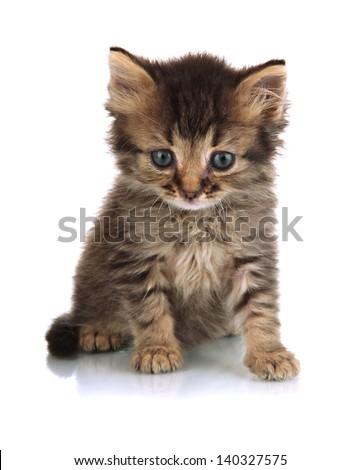 Small kitten isolated on white - stock photo