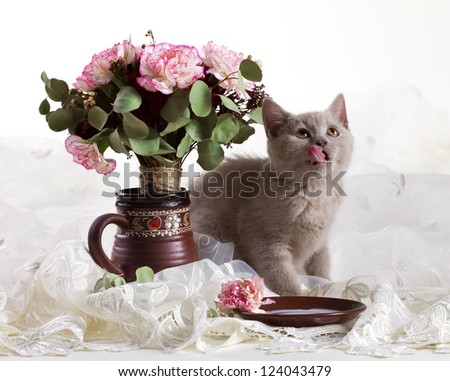 small kitten  licking lips near  flowers in jug on white background - stock photo