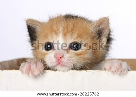Small kitten looking out of a cardboard box - stock photo