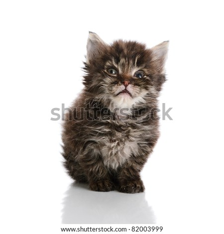 Small kitten looking to camera isolated over white background