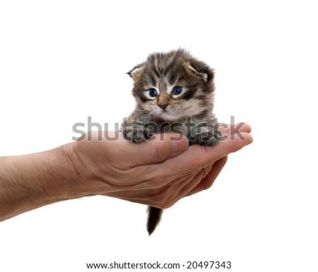 small kitten on a hand - stock photo