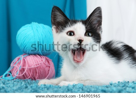 Small kitten on blue carpet on fabric background - stock photo