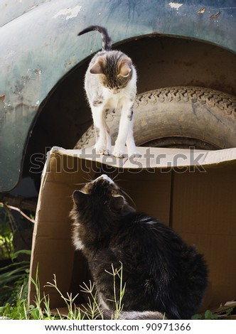 small kitten on cardboard box looking at the cat - stock photo