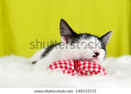 Small kitten on white carpet on fabric background