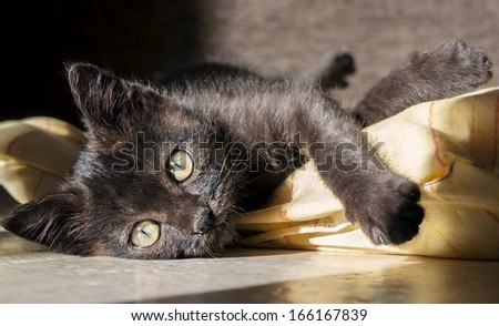 small kitten on yellow pillow - stock photo