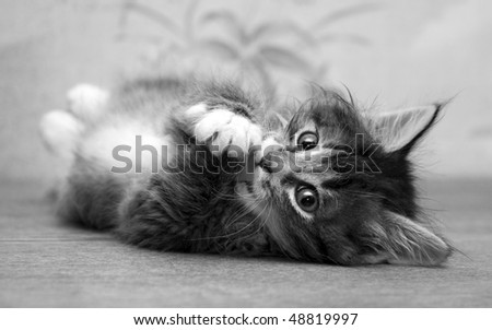 Small kitten playing at the table at home and looking at photographer - stock photo