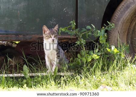 small kitten sitting near old rusty car - stock photo