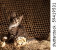 Small kitten sitting on the fisherman's net - stock photo