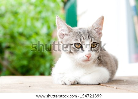 Small kitten sitting on the wooden table