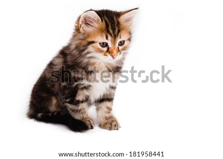 Small kitten sitting on white background