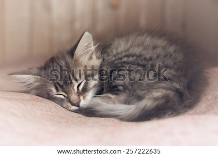 Small kitten sleep on sofa, soft focus - stock photo