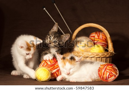 Small kitten sleeping and playing with balls of threads and other knitting accessories - stock photo