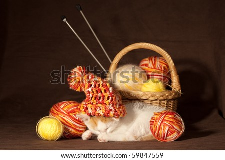 Small kitten sleeping between balls of threads and other knitting accessories - stock photo
