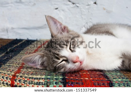 Small kitten sleeping on the bench