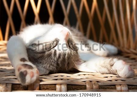 Small kitten sleeping on the wooden armchair - stock photo