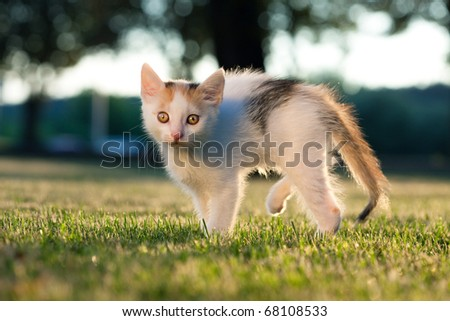 Small kitten standing on the grass in the evening sunlight - stock photo