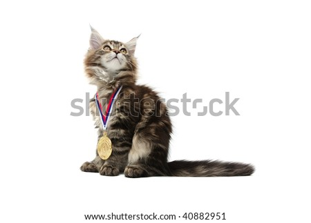 small kitten with gold medal against white background - stock photo