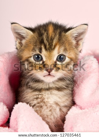 Small kitten wrapped in pink banket with pink background - stock photo
