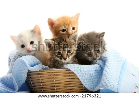 Small kittens in straw basket, isolated on white - stock photo