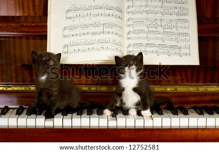 Small kittens sit on keys of the piano - stock photo