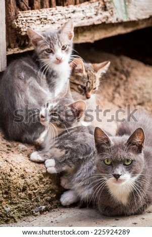 Small kittens with mom in Tuscany - stock photo