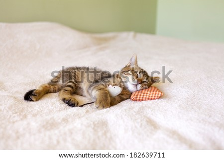 Small Kitty With Mouse - stock photo