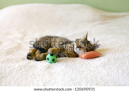 Small Kitty With Red Pillow And Soccer Ball - stock photo