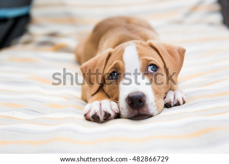 Small Labrador Mix Puppy Laying Outside on Striped Lounger