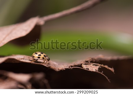 Small ladybug on a old leaf - stock photo