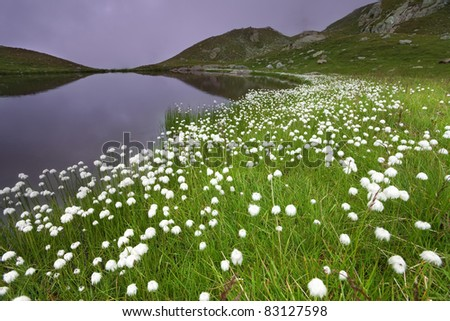 Small lake in high mountain during summer with cotton flowers along the shores and a foggy sky - stock photo