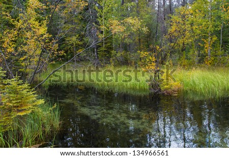 Small lake surrounded by bushes in savage forest. Autumn. - stock photo