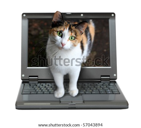 small laptop with cat out of screen - stock photo