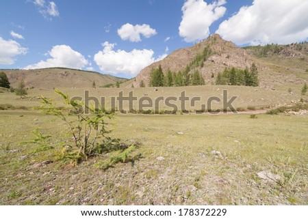 Small larch at a mountain foot. A summer landscape. East Sayan mountains.