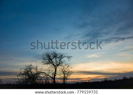 Small leafless tree against the background of sunset