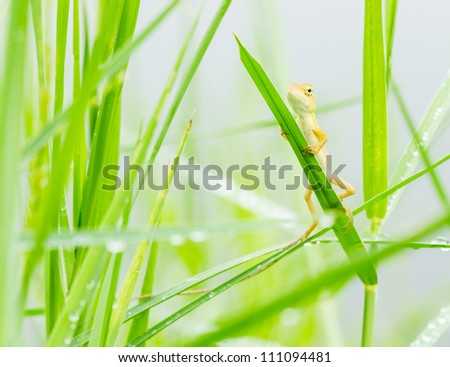small lizard hiding on fresh leaves  green grass in the nature at Thailand - stock photo