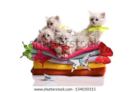 small many gray furry cats, stack of soft towels and colorful  butterflies on white background - stock photo