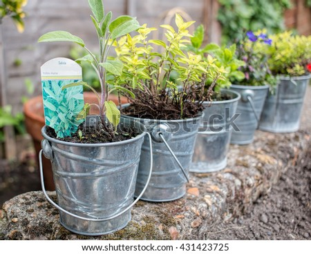 Small Metal Plant Pots, Flowers & Herbs. - stock photo