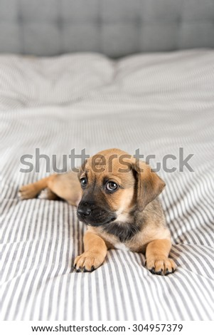 Small Mixed Breed Brown and Black Puppy Looking up - stock photo