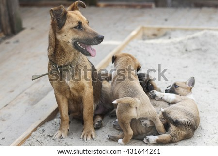 small mongrel puppy playing near his mother in the sand