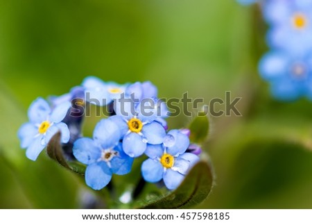 Small mountain blue flower