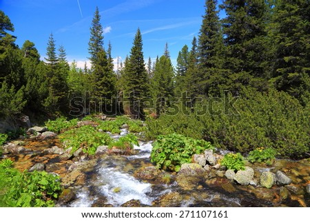 Small mountain river surrounded by green vegetation and pine tree forest in summer - stock photo