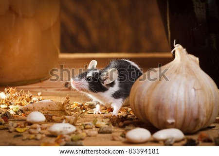 Small mouse smell something in basement - stock photo